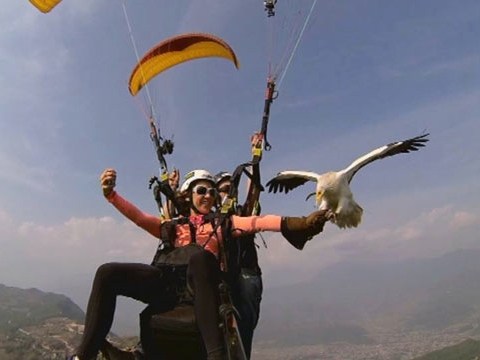 Parahawking on ABC News Nightline