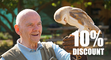 Bird of Prey Experience - 20% Winter Discount