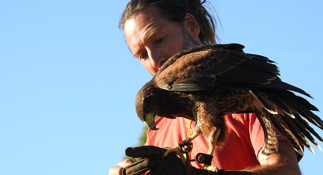 FALCONRY COURSE - 5 DAYS