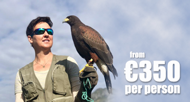 Falconry Courses - from €350 pp