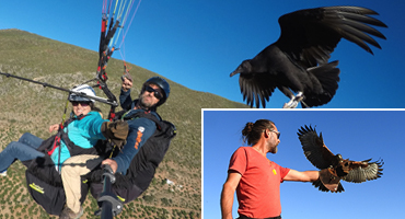PARAHAWKING VIP DAY